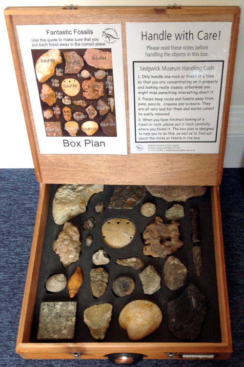 Open Fossils box